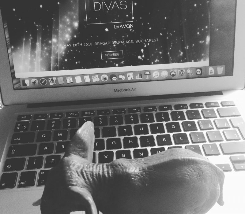 DigitalDivas2016